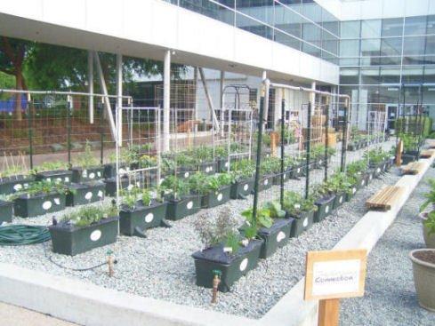 herb garden at google